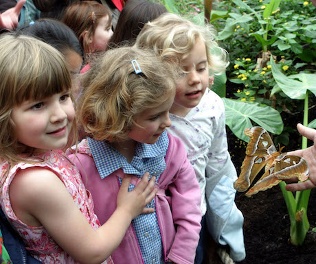 London Zoo Butterfly and Children