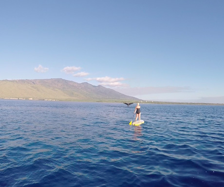 Whale watching in South Maui