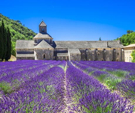luberon-lavender