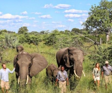Abu Camp Elephant