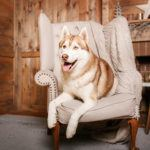 The UK's first holiday park exclusively for pets