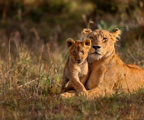 Lioness and cub obeying the rule of thirds