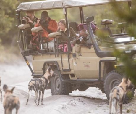 Wild Dogs - Letaka Mobile Safari - Khwai Community Area