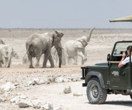 Wildlife Drive From Ongava in Namibia