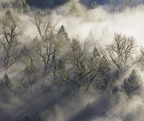 morning-mists