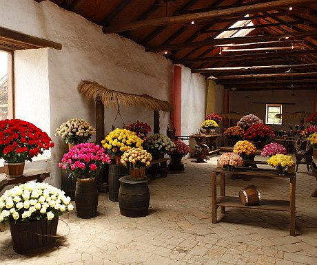 Andean Flowers