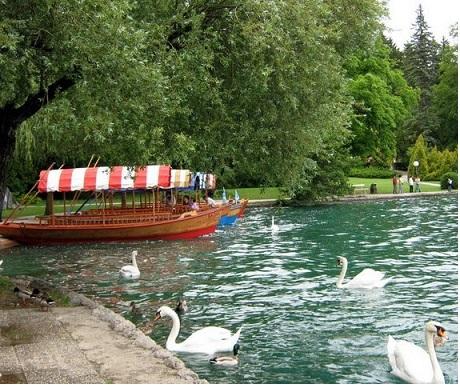 Bled lake,pletna boat and swans