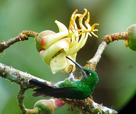 Flower h-bird