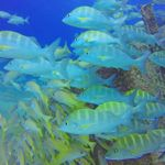 Top 3 reasons to visit Cabo Pulmo Marine Reserve in Baja Sur, Mexico