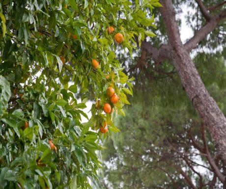 The Orange Garden edited