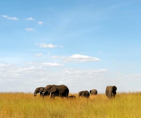 Elephants in Northern Serengeti from Lamai Camp