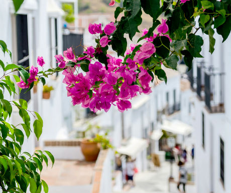 Frigiliana bougainvilla and whitewashed street view