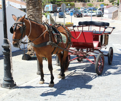 Frigiliana horse and carriage