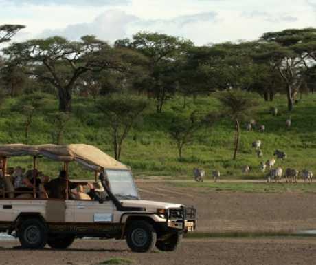 Lemala vehicle with zebra in Ngorongoro Crater