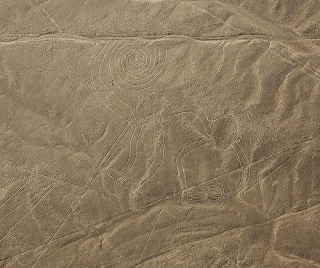 Monkey Nazca Line