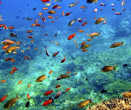 Raja Ampat Archipelago