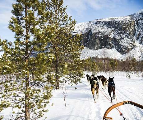 norway-dog-sledding