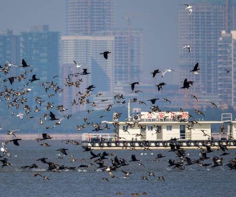 wetland-birds-hong-kong