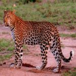 4 luxury lodges in South Africa's Sabi Sabi Private Reserve