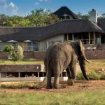 Mhondoro Game Lodge opens in Welgevonden Game Reserve, South Africa