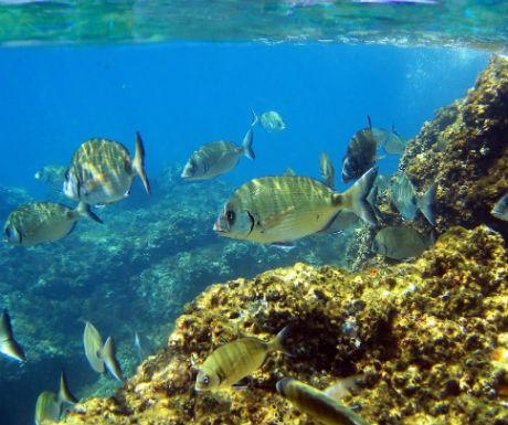 Tamariu Costa Brava diving