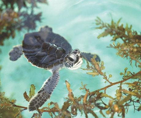 palm beach wildlife