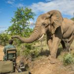 South Africa's most luxurious safari