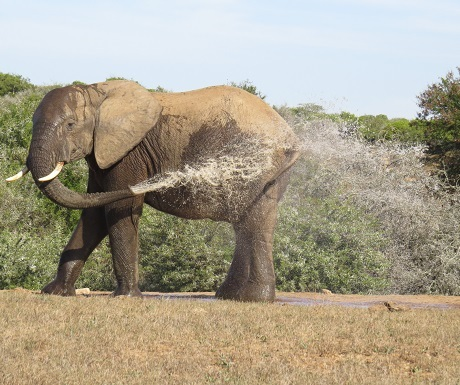 Spa routine at Addo Elephant National Park, South Africa