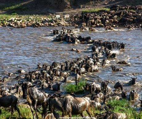Wild Frontiers wildebeest river crossing