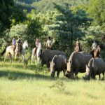 Christmas horse ride with herd of rhino at Ants Collection Waterberg South Africa