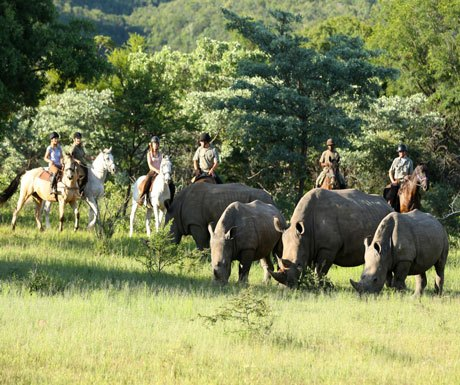 Riding with rhinos at Ants Nest, Waterberg South Africa