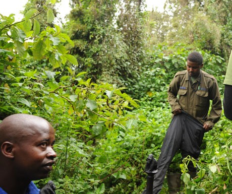 gorilla-guide-rwanda