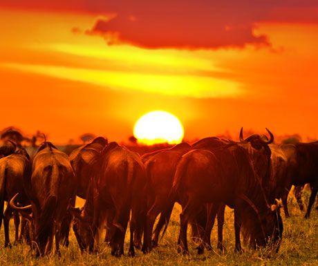 masai-mara
