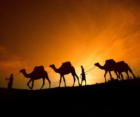Camels silhouette Sabuk Laikipia Kenya Christmas safaris