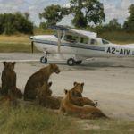 Planes, trains and luxury safari transportation
