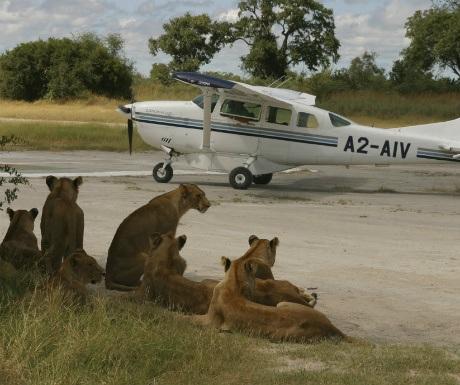 botswana-plane