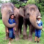 Thailand's most luxurious ethical elephant experience