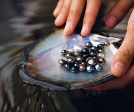 black-pearl
