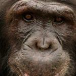 The 5 best places to see primates in Africa