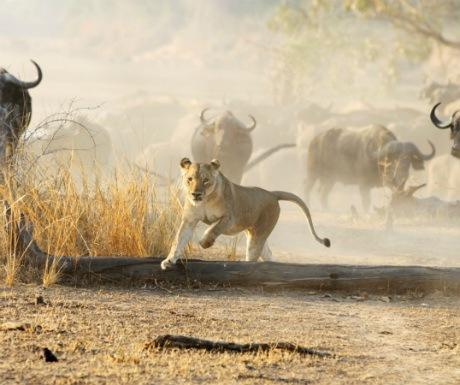 3-the-zambezi-river-valley