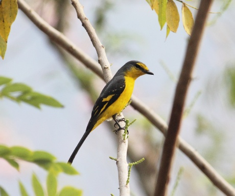 birding-in-thattekad-experience-travel-group-south-india-resized