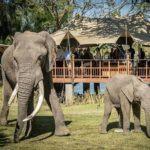 5 of the best activities along the Zambezi River