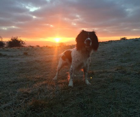 george-at-sunrise