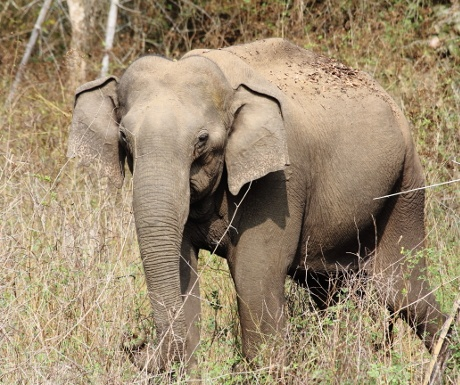 nagarhole-experience-travel-group-south-india