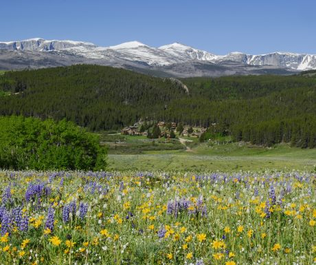 Paradise Ranch View Wildflowers
