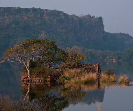 Ranthambore National Park2