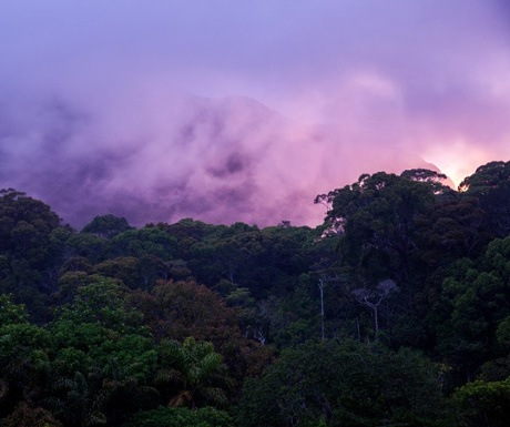 sinharaja-rainforest-experience-travel-group-sri-lanka-resized