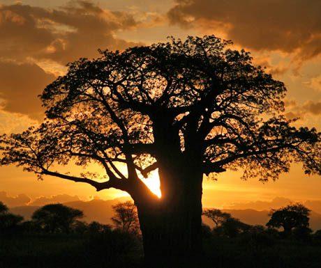 tarangire-sunrise