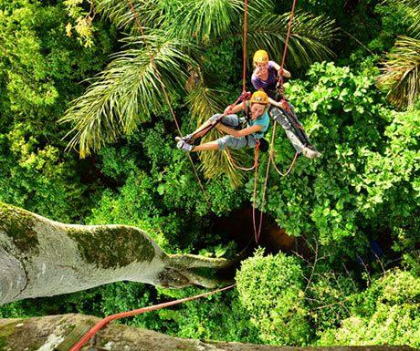 amazon climb trees