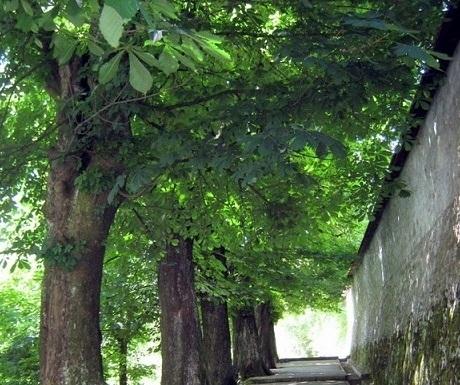 5 superb experiences in Skofja Loka, Slovenia, shaded lane to Loka castle